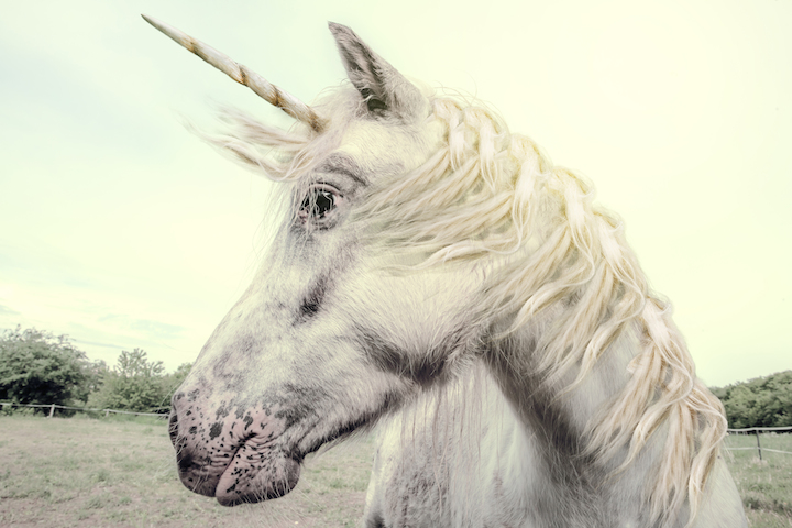 Performance Content Marketer Unicorn